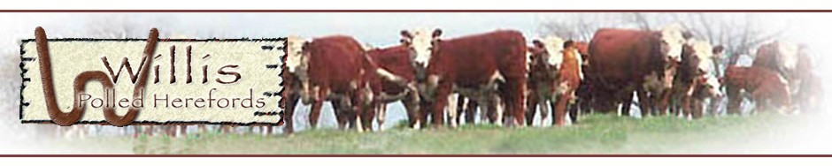 Willis Polled Herefords